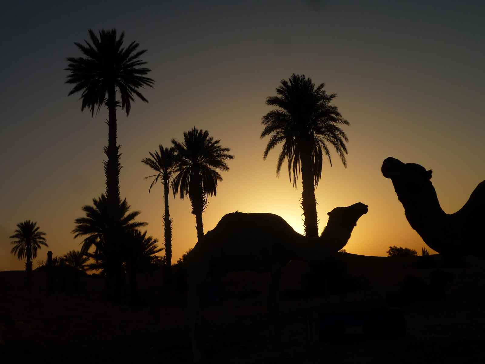 Camel treks marrakech excursion day tour