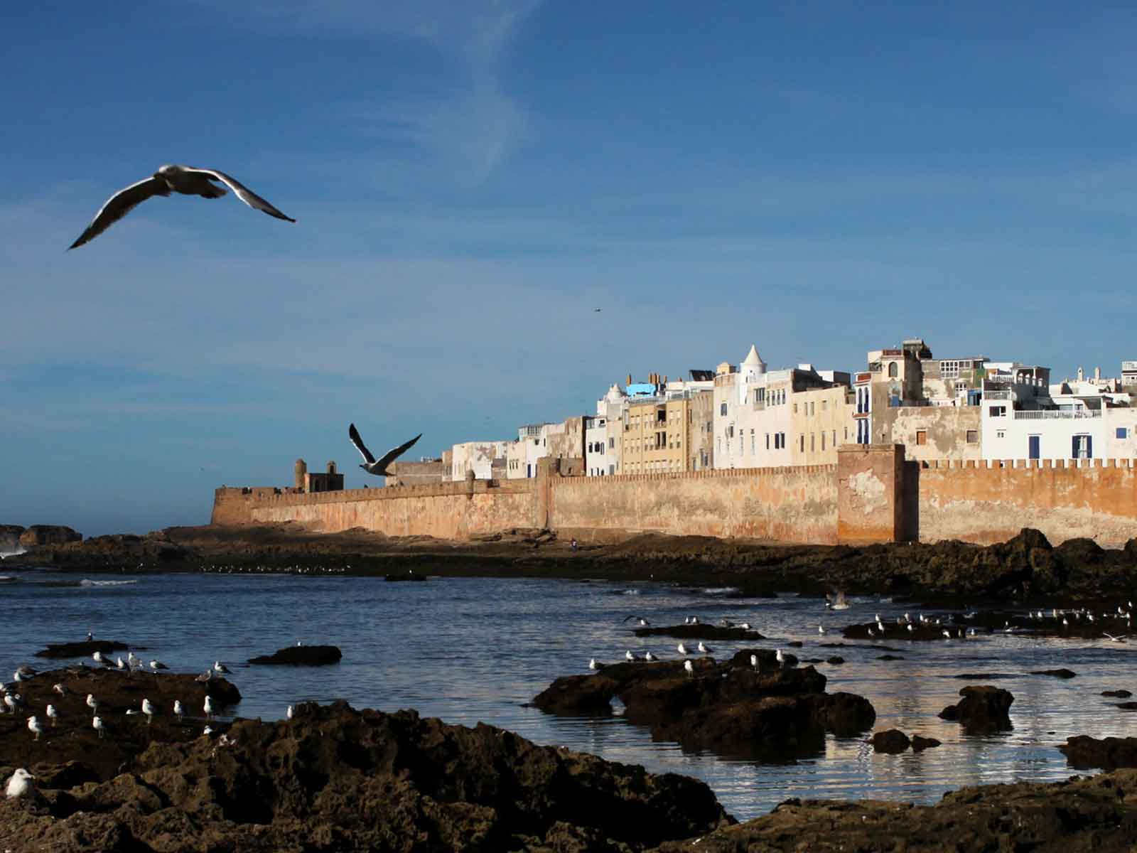 the best shared day trip to Essaouira from Marrakech