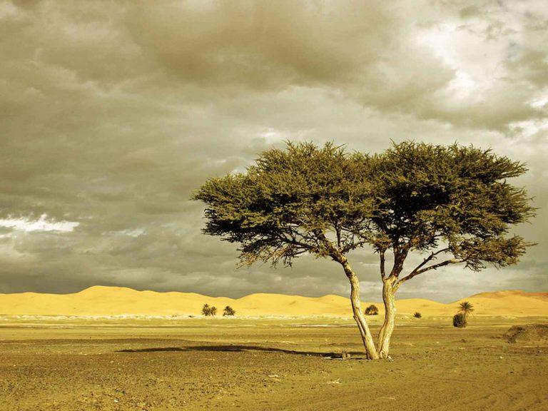 4-day Sahara desert tour to Erg Chigaga from Marrakech
