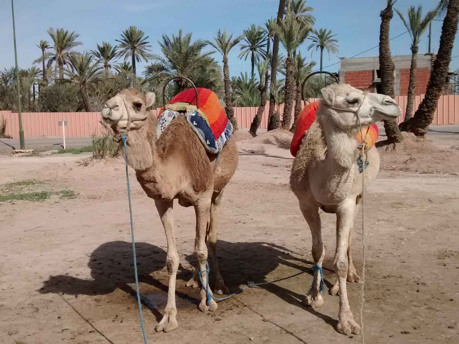 Marrakech excursion camel trekking