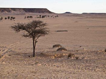 Morocco desert tour from marrakech to zagora and merzouga 4 days
