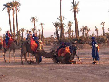 The best camel ride in Marrakech