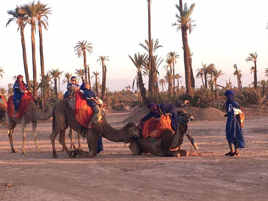Private Marrakech camel ride tour