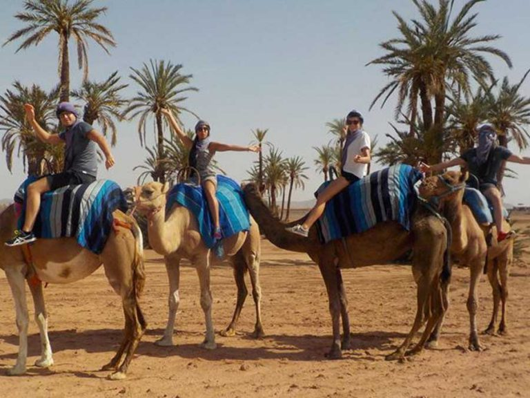 Private 1 hour camel ride Marrakech