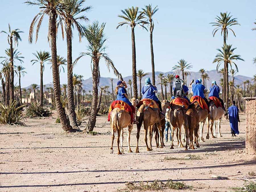 camel trek private tour Marrakech palmeraie