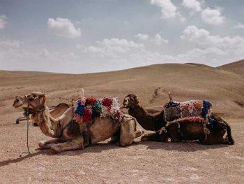 Sunset camel ride in Marrakech desert