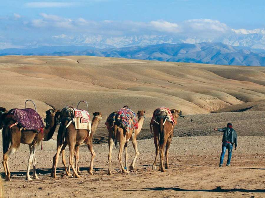 Marrakech agafay desert sunset camel trek