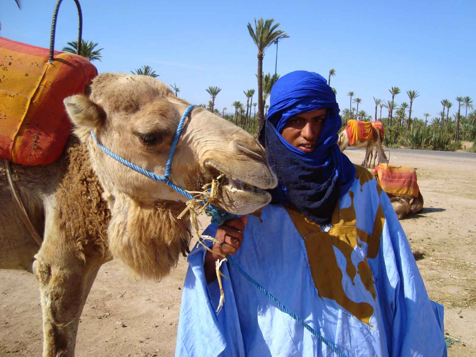 camel treks marrakech day trip excursions