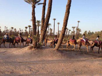 camel trekking in Marrakech