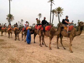Marrakech palm grove camel riding and quad biking tour