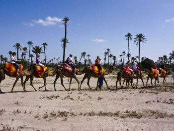 Half day quad biking and camel ride adventure in the palm grove of Marrakech