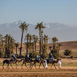 Camel ride in the Palmeraie Marrakech