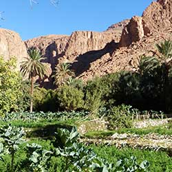 The oasis of Todgha